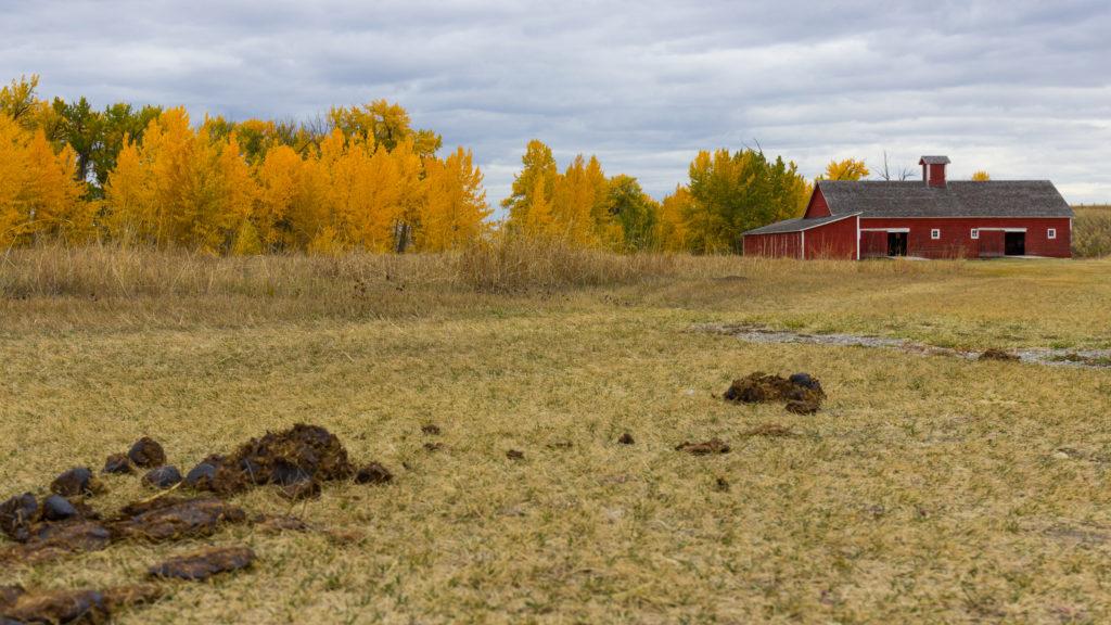 Autumn at Bar U Ranch - Red Barn Poo