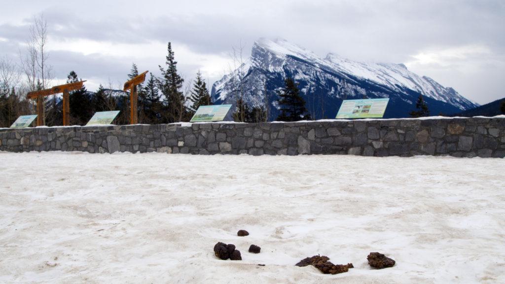 Banff Mount Rundle Poo